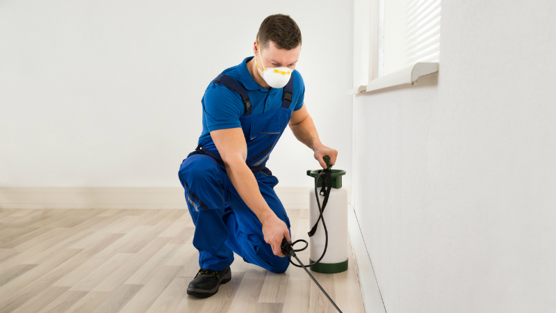 Understanding Essential Facts Regarding Pest Control In Fort Mill SC